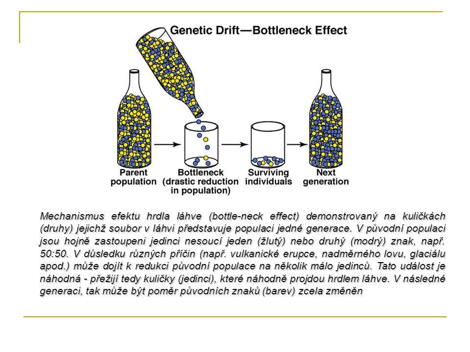 Mechanismus efektu hrdla láhve (bottle-neck effect) demonstrovaný na kuličkách (druhy) jejichž soubor v láhvi představuje populaci jedné generace. V p