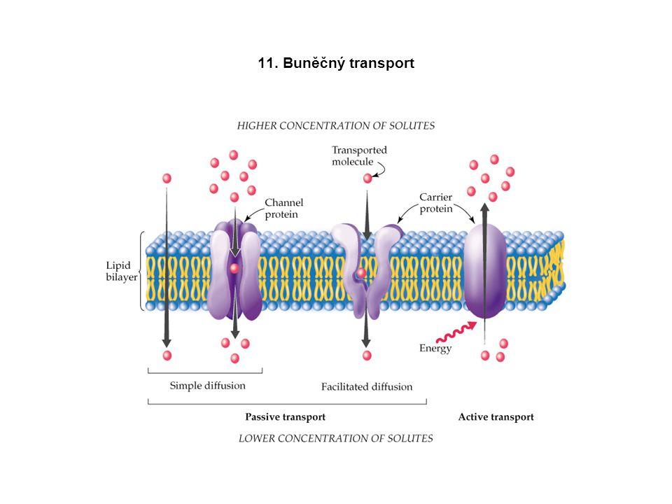 11. Buněčný transport
