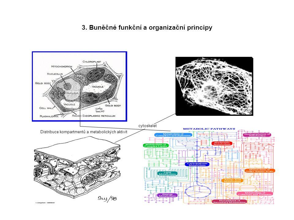 3. Buněčné funkční a organizační principy cytoskelet Distribuce kompartmentů a metabolických aktivit
