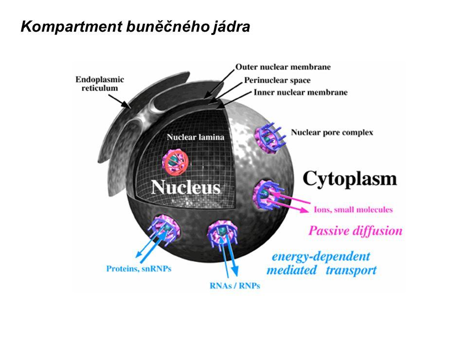 Kompartment buněčného jádra
