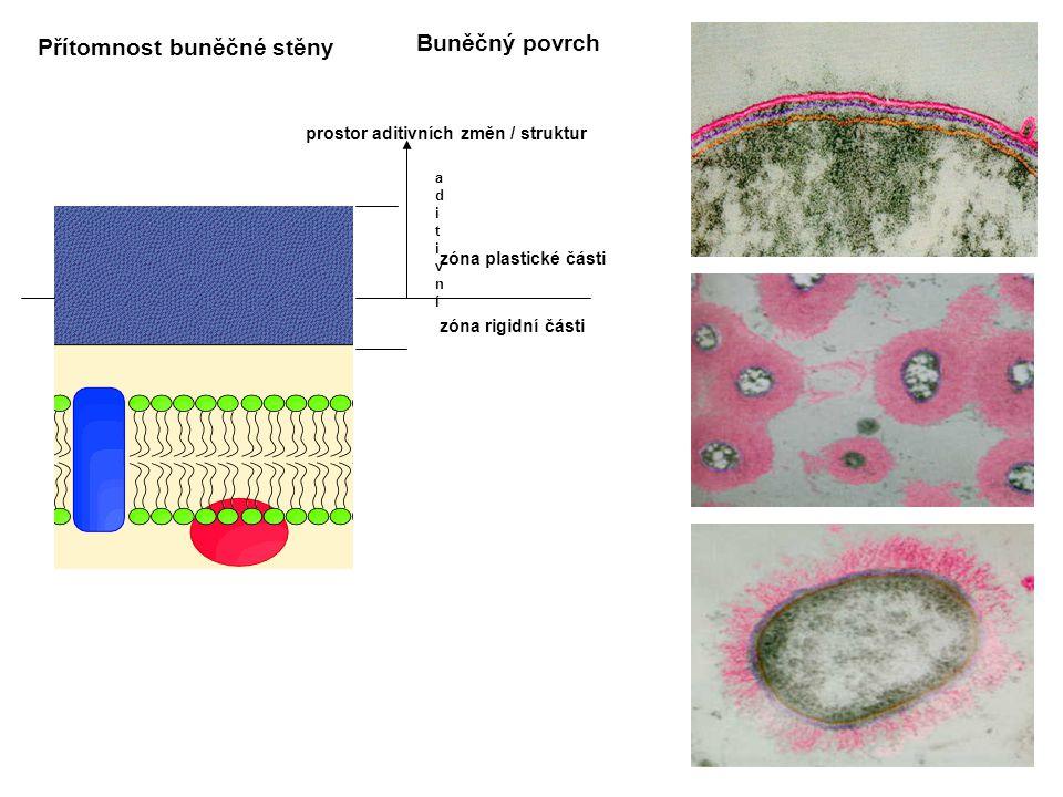 Buněčný povrch zóna rigidní části zóna plastické části aditivníaditivní prostor aditivních změn / struktur Přítomnost buněčné stěny