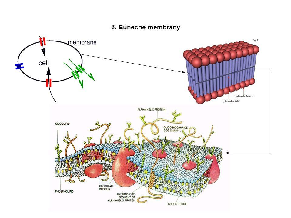 6. Buněčné membrány