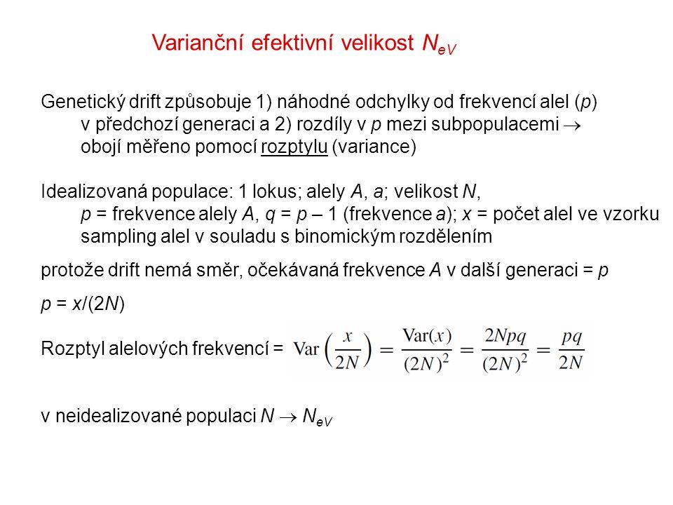 Varianční efektivní velikost N eV Genetický drift způsobuje 1) náhodné odchylky od frekvencí alel (p) v předchozí generaci a 2) rozdíly v p mezi subpopulacemi  obojí měřeno pomocí rozptylu (variance) Idealizovaná populace: 1 lokus; alely A, a; velikost N, p = frekvence alely A, q = p – 1 (frekvence a); x = počet alel ve vzorku sampling alel v souladu s binomickým rozdělením protože drift nemá směr, očekávaná frekvence A v další generaci = p p = x/(2N) Rozptyl alelových frekvencí = v neidealizované populaci N  N eV