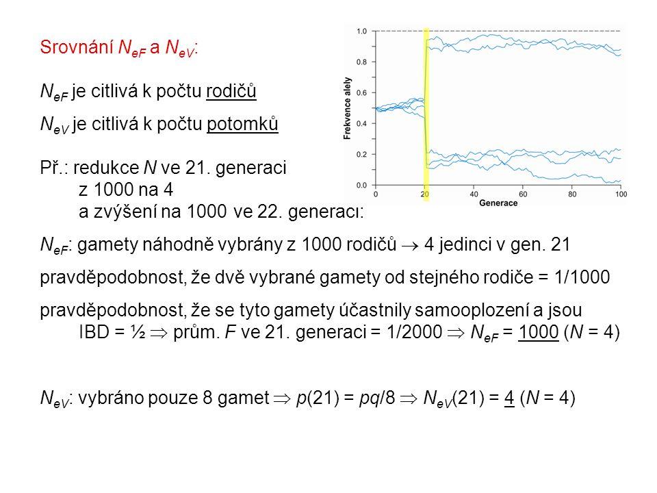 Srovnání N eF a N eV : N eF je citlivá k počtu rodičů N eV je citlivá k počtu potomků Př.: redukce N ve 21.