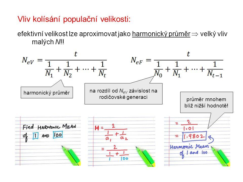 harmonický průměr na rozdíl od N eV závislost na rodičovské generaci Vliv kolísání populační velikosti: efektivní velikost lze aproximovat jako harmonický průměr  velký vliv malých N!.
