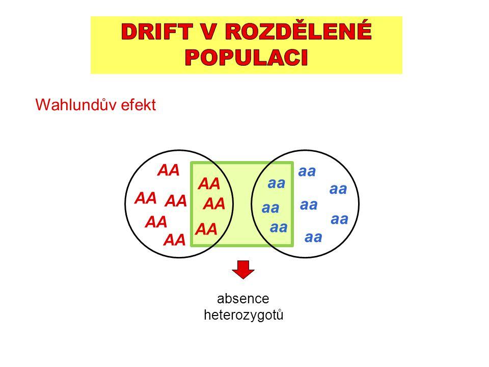 AA aa Wahlundův efekt absence heterozygotů