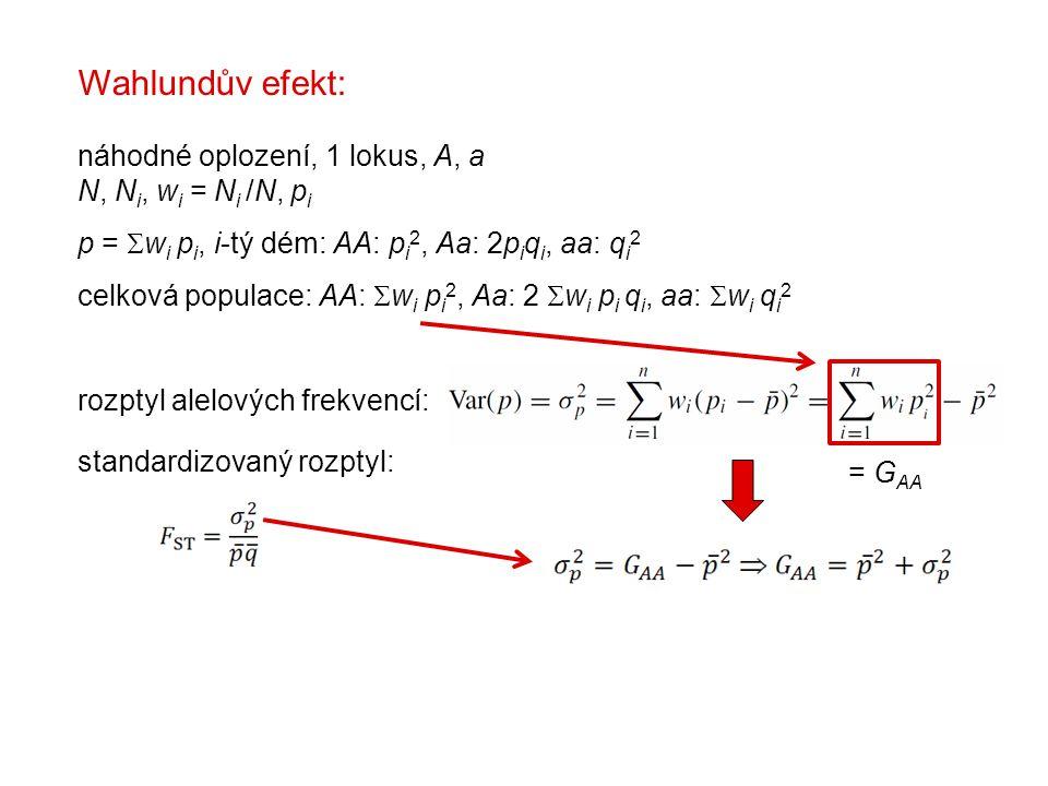 Wahlundův efekt: náhodné oplození, 1 lokus, A, a N, N i, w i = N i /N, p i p =  w i p i, i-tý dém: AA: p i 2, Aa: 2p i q i, aa: q i 2 celková populace: AA:  w i p i 2, Aa: 2  w i p i q i, aa:  w i q i 2 rozptyl alelových frekvencí: standardizovaný rozptyl: = G AA