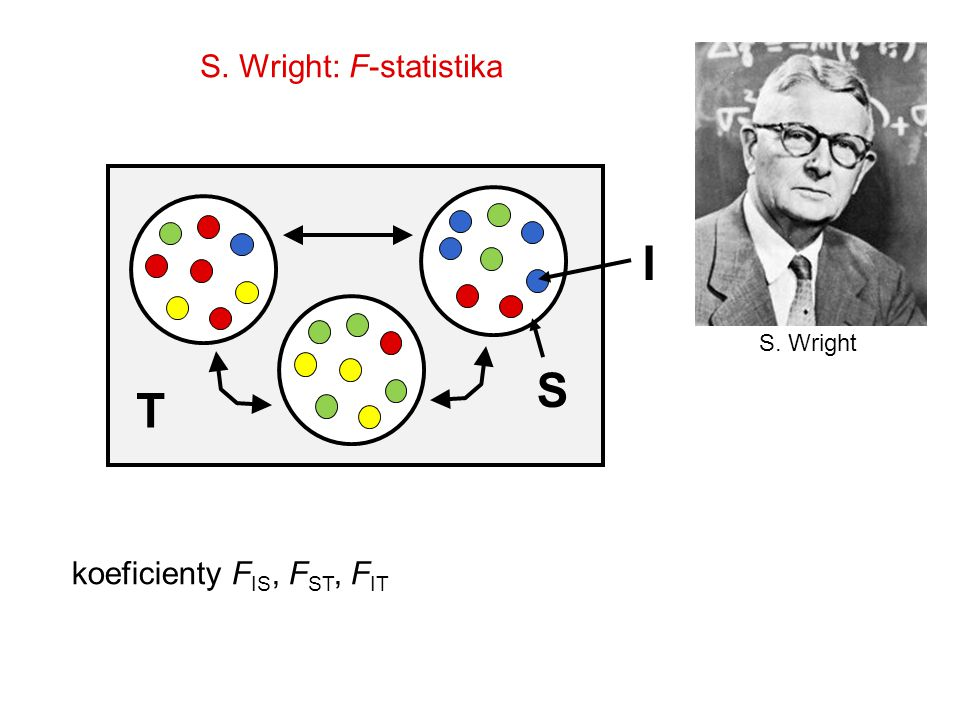 S. Wright: F-statistika S. Wright I T S koeficienty F IS, F ST, F IT