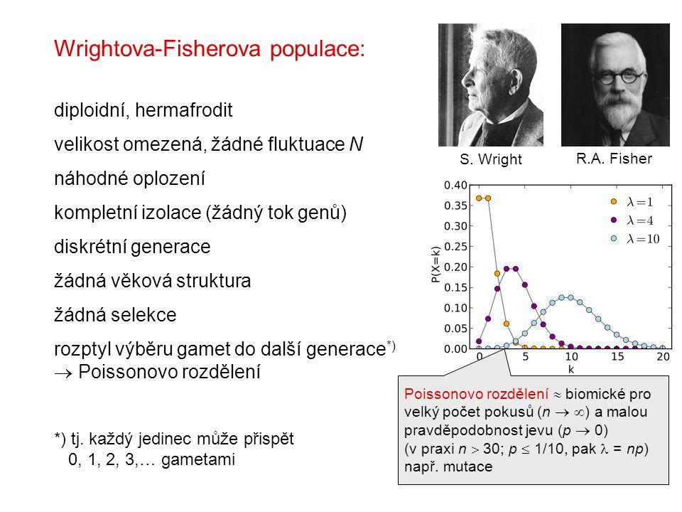 S. Wright R.A. Fisher Wrightova-Fisherova populace: diploidní, hermafrodit velikost omezená, žádné fluktuace N náhodné oplození kompletní izolace (žád