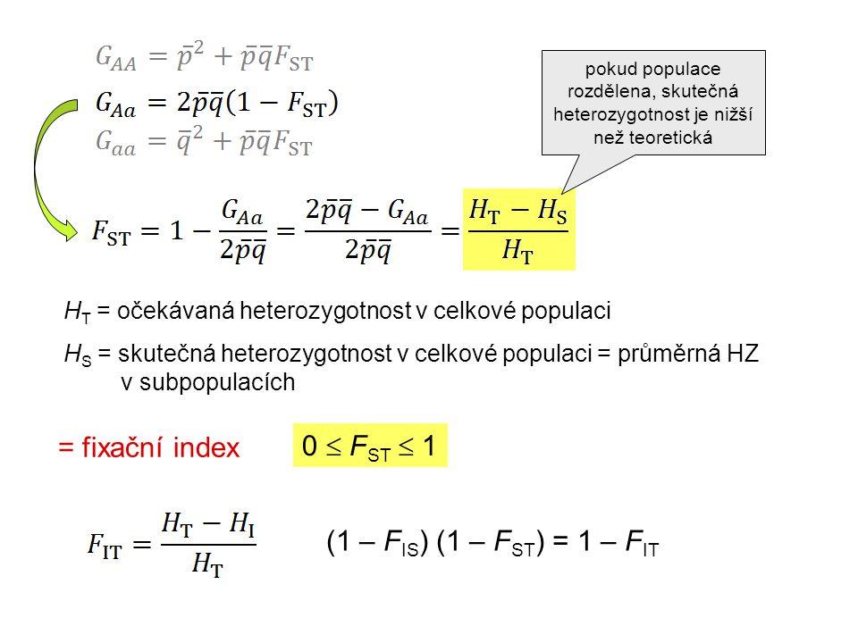 H T = očekávaná heterozygotnost v celkové populaci H S = skutečná heterozygotnost v celkové populaci = průměrná HZ v subpopulacích 0  F ST  1 = fixační index (1 – F IS ) (1 – F ST ) = 1 – F IT pokud populace rozdělena, skutečná heterozygotnost je nižší než teoretická