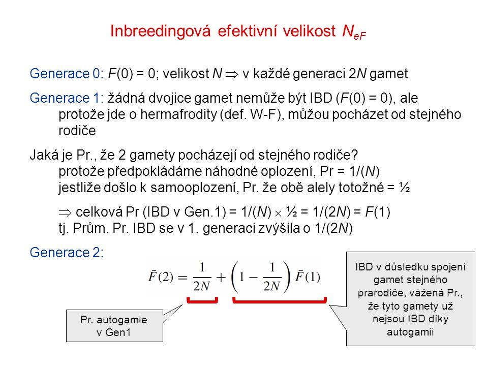 Inbreedingová efektivní velikost N eF Generace 0: F(0) = 0; velikost N  v každé generaci 2N gamet Generace 1: žádná dvojice gamet nemůže být IBD (F(0) = 0), ale protože jde o hermafrodity (def.