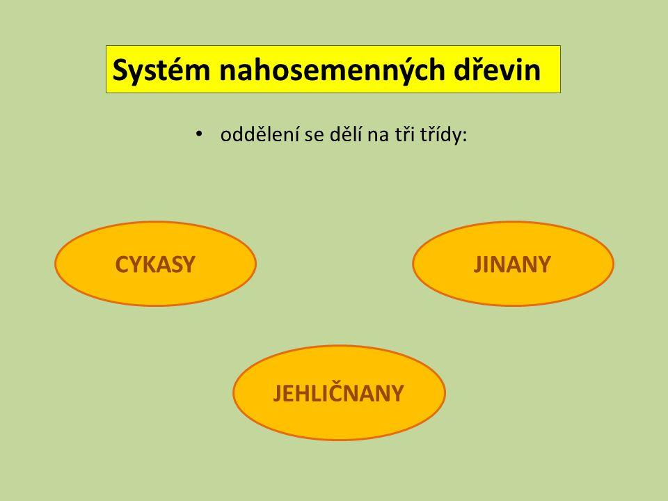 Systém nahosemenných dřevin oddělení se dělí na tři třídy: CYKASY JEHLIČNANY JINANY