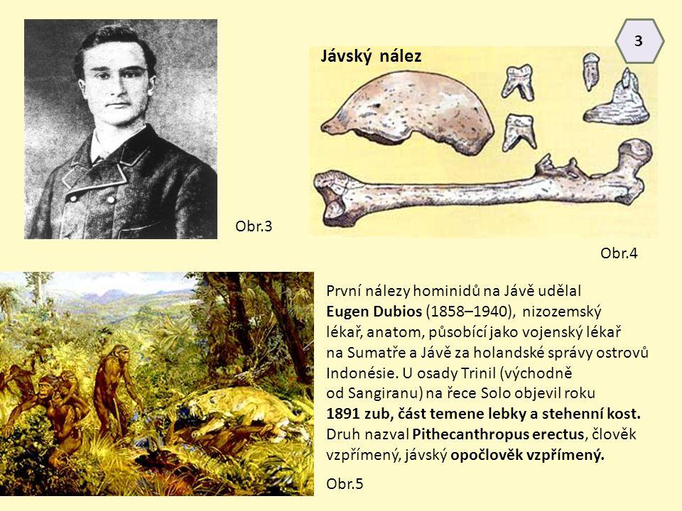 První nálezy hominidů na Jávě udělal Eugen Dubios (1858–1940), nizozemský lékař, anatom, působící jako vojenský lékař na Sumatře a Jávě za holandské s