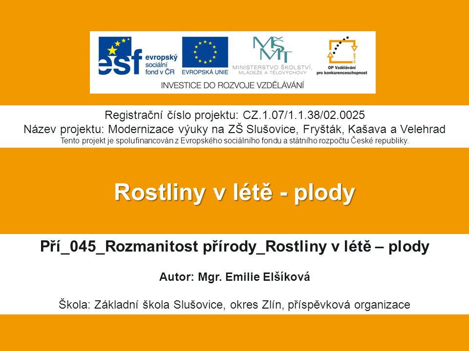 Rostliny v létě - plody Pří_045_Rozmanitost přírody_Rostliny v létě – plody Autor: Mgr.