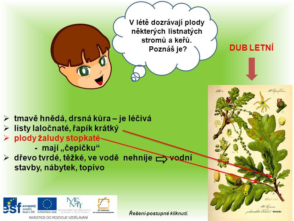 Ahoj, Kterou kořenovou zeleninu máme v létě na zahrádce? 7x Řešení-kliknutí na obrázek.
