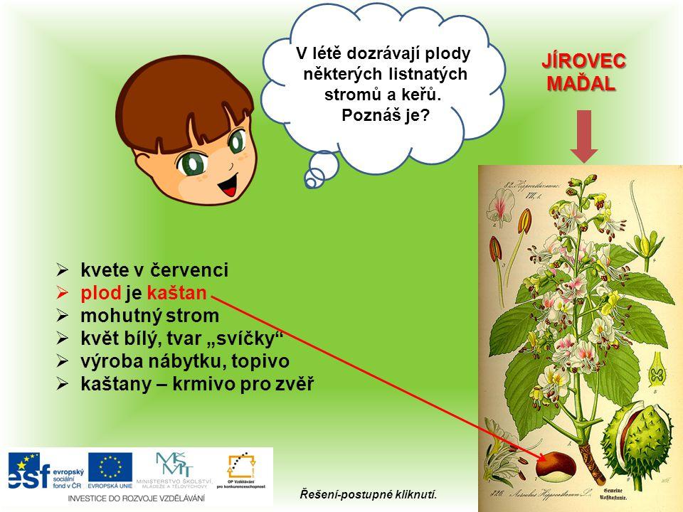 Ahoj, Kterou cibulovou zeleninu máme v létě na zahrádce? 4x Řešení-kliknutí na obrázek.