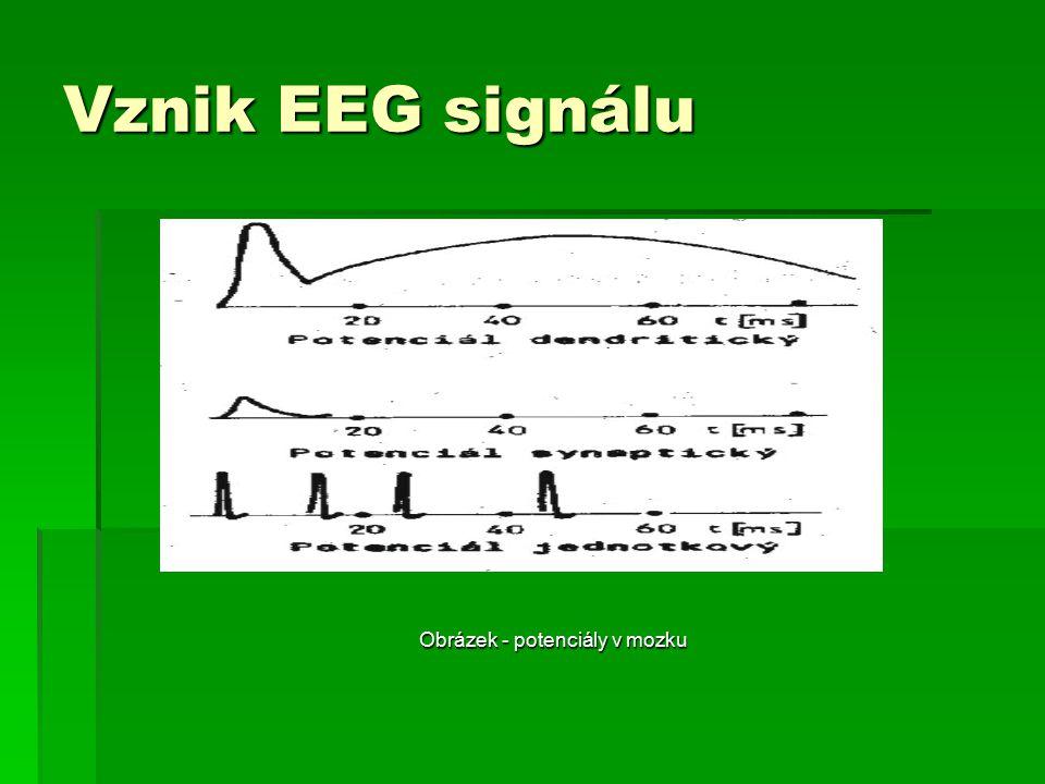 Vznik EEG signálu Obrázek - potenciály v mozku