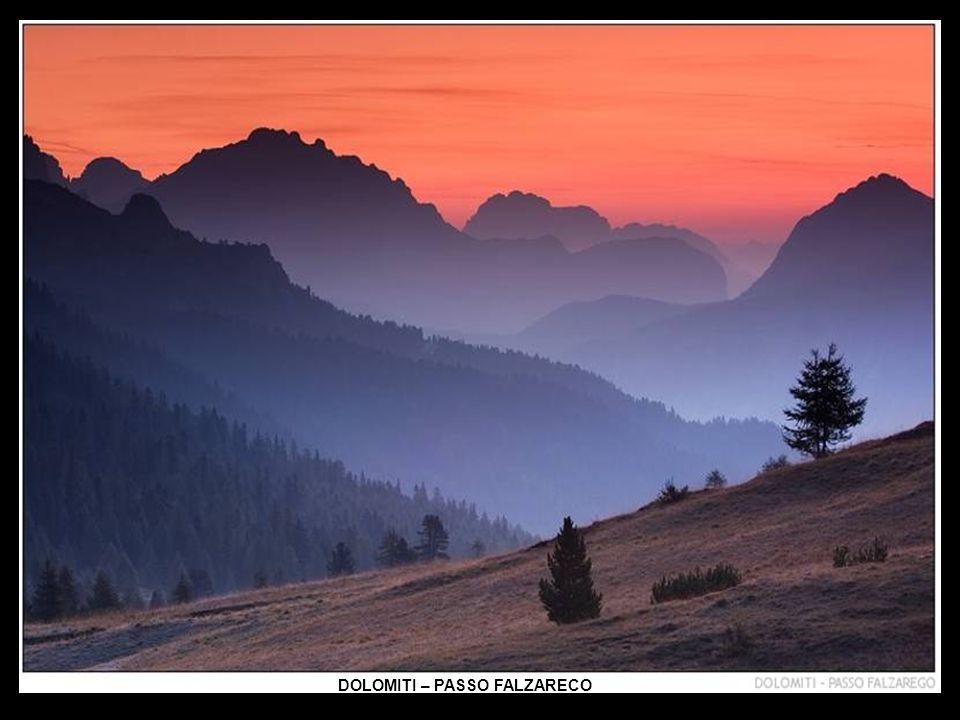Vratič alpský
