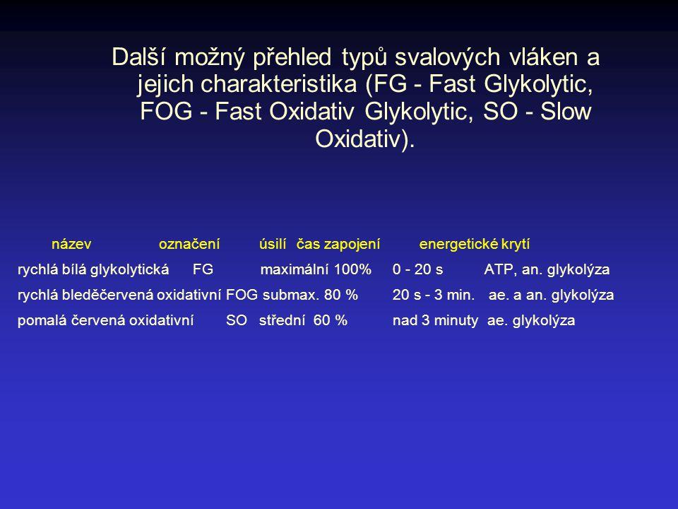 název označeníúsilí čas zapojení energetické krytí rychlá bílá glykolytickáFG maximální 100% 0 - 20 s ATP, an. glykolýza rychlá bleděčervená oxidativn