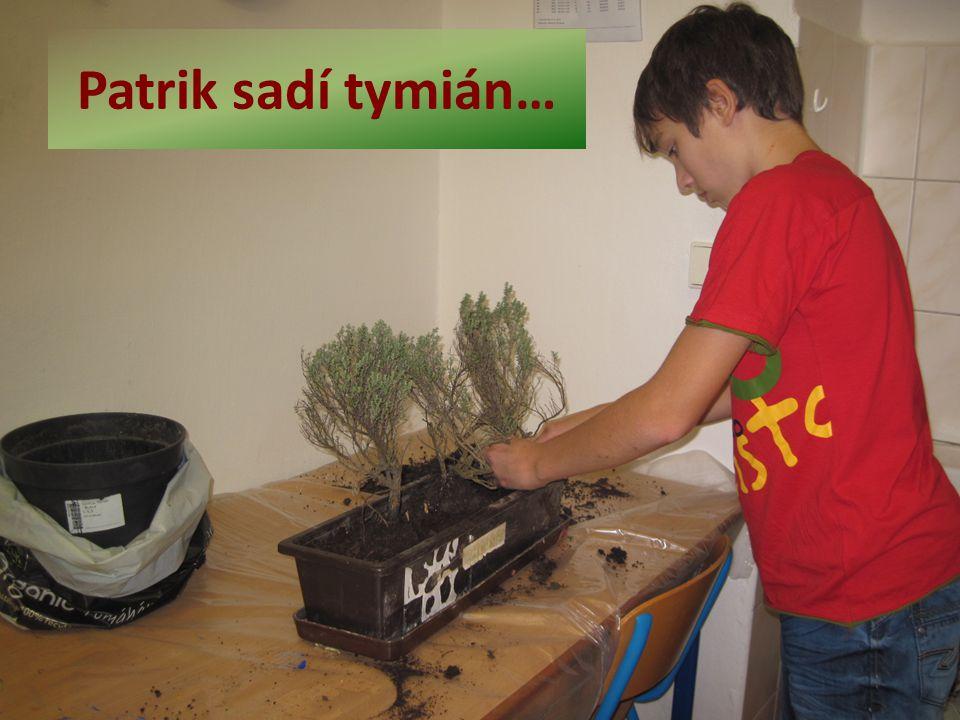 Patrik sadí tymián…