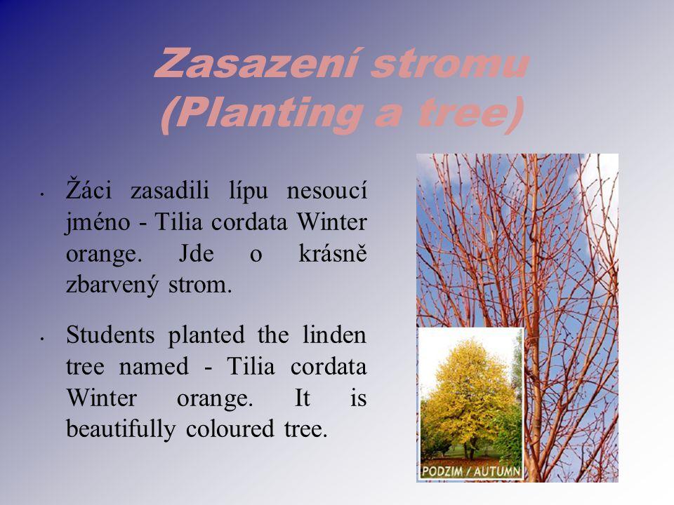 Zasazení stromu (Planting a tree) Žáci zasadili lípu nesoucí jméno - Tilia cordata Winter orange.