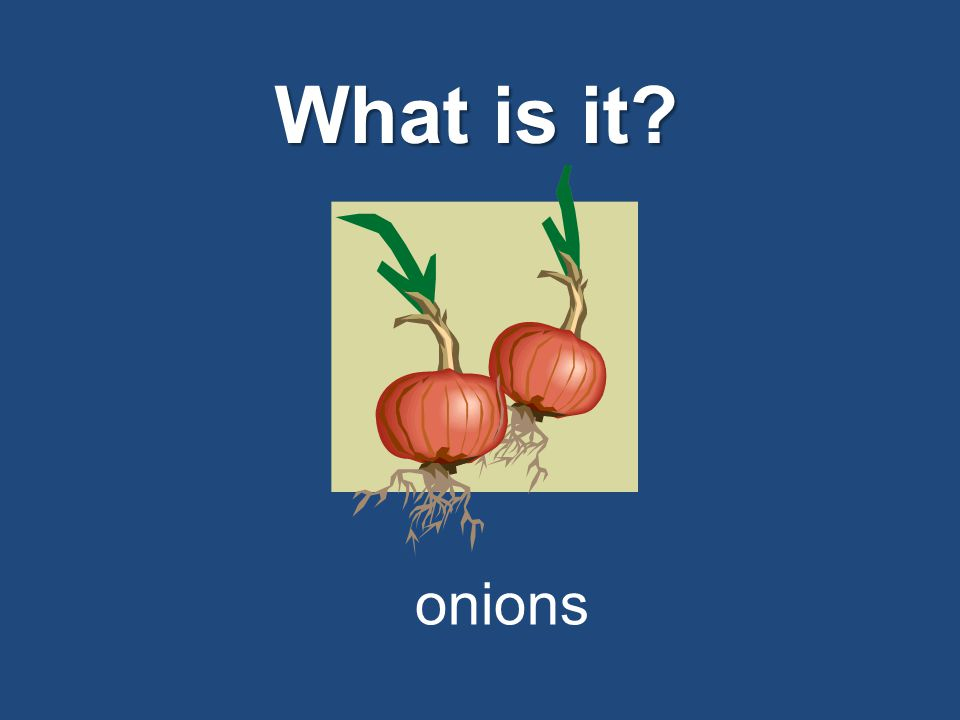 What is it? onions