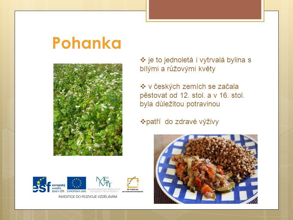 Pohanka  je to jednoletá i vytrvalá bylina s bílými a růžovými květy  v českých zemích se začala pěstovat od 12.