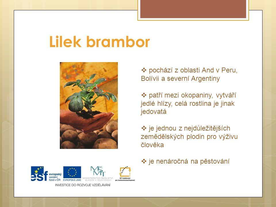 Lilek brambor  pochází z oblasti And v Peru, Bolívii a severní Argentiny  patří mezi okopaniny, vytváří jedlé hlízy, celá rostlina je jinak jedovatá  je jednou z nejdůležitějších zemědělských plodin pro výživu člověka  je nenáročná na pěstování