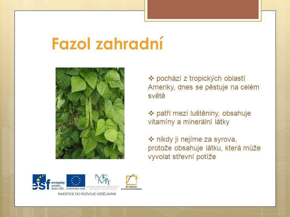 Fazol zahradní  pochází z tropických oblastí Ameriky, dnes se pěstuje na celém světě  patří mezi luštěniny, obsahuje vitamíny a minerální látky  nikdy ji nejíme za syrova, protože obsahuje látku, která může vyvolat střevní potíže