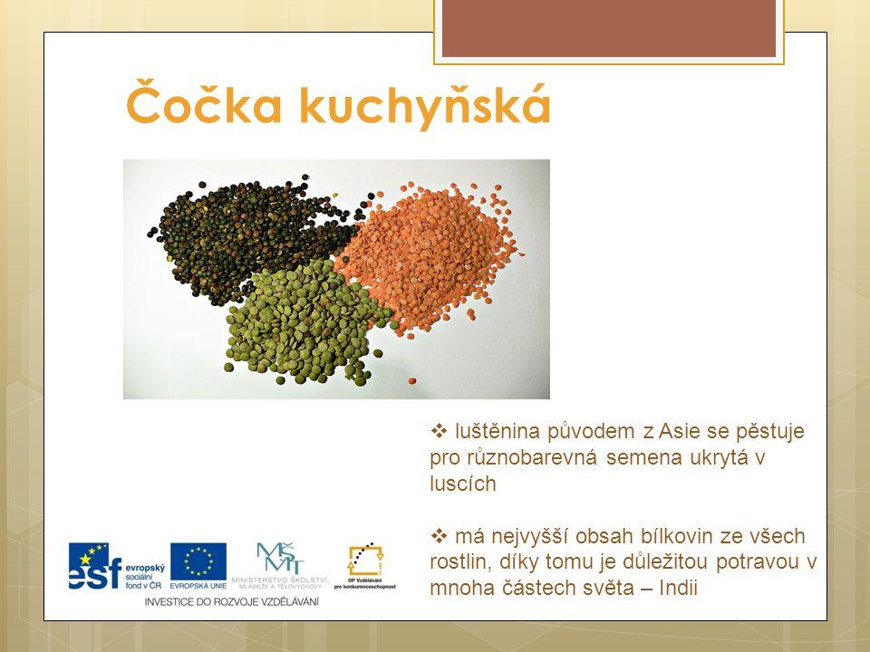Čočka kuchyňská  luštěnina původem z Asie se pěstuje pro různobarevná semena ukrytá v luscích  má nejvyšší obsah bílkovin ze všech rostlin, díky tom