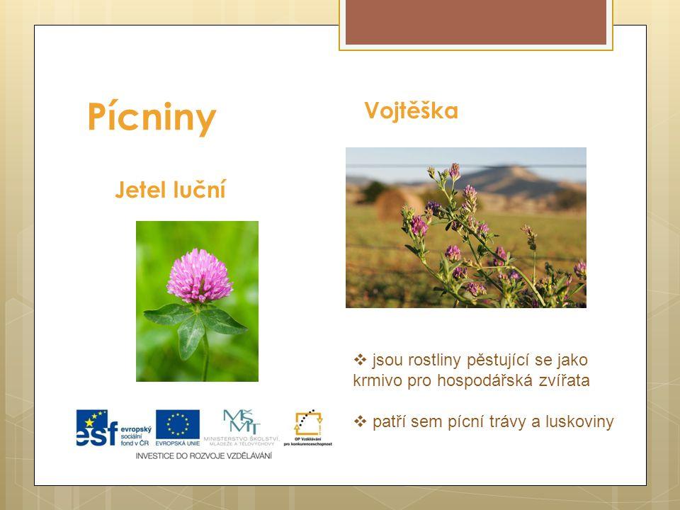 Pícniny Jetel luční Vojtěška  jsou rostliny pěstující se jako krmivo pro hospodářská zvířata  patří sem pícní trávy a luskoviny