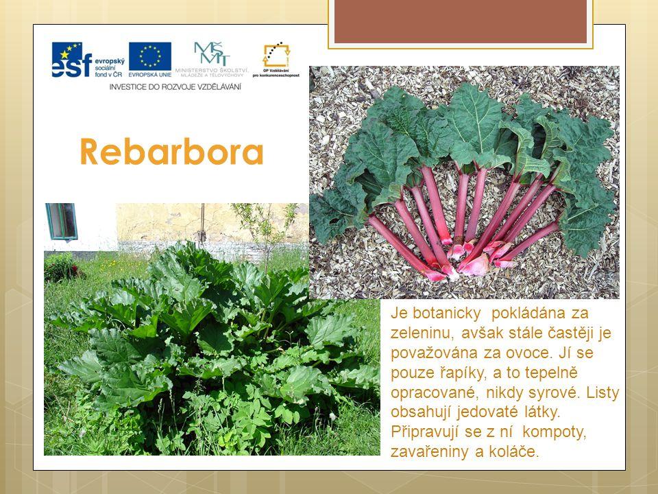 Rebarbora Je botanicky pokládána za zeleninu, avšak stále častěji je považována za ovoce. Jí se pouze řapíky, a to tepelně opracované, nikdy syrové. L