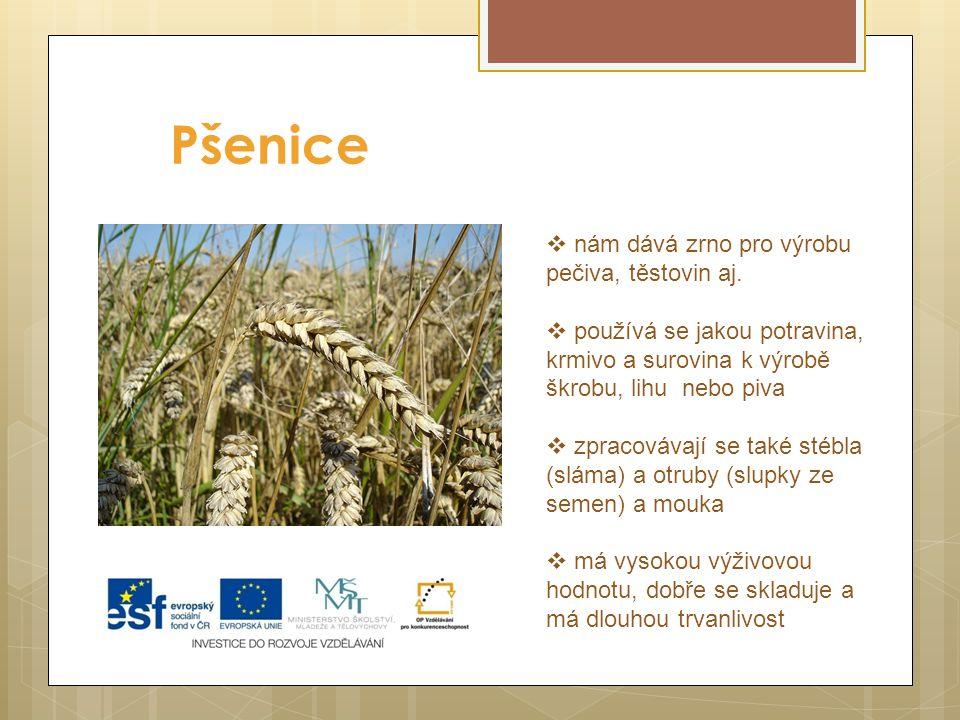 Pšenice  nám dává zrno pro výrobu pečiva, těstovin aj.  používá se jakou potravina, krmivo a surovina k výrobě škrobu, lihu nebo piva  zpracovávají