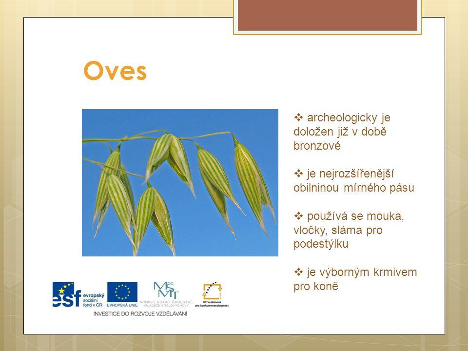 Oves  archeologicky je doložen již v době bronzové  je nejrozšířenější obilninou mírného pásu  používá se mouka, vločky, sláma pro podestýlku  je