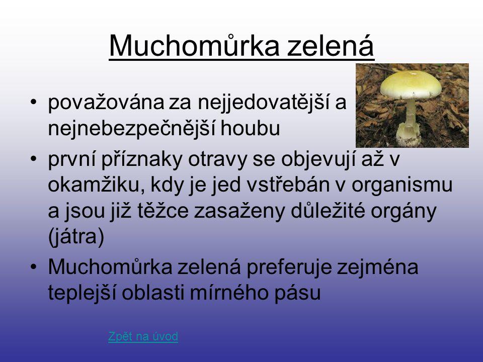 Muchomůrka zelená považována za nejjedovatější a nejnebezpečnější houbu první příznaky otravy se objevují až v okamžiku, kdy je jed vstřebán v organis