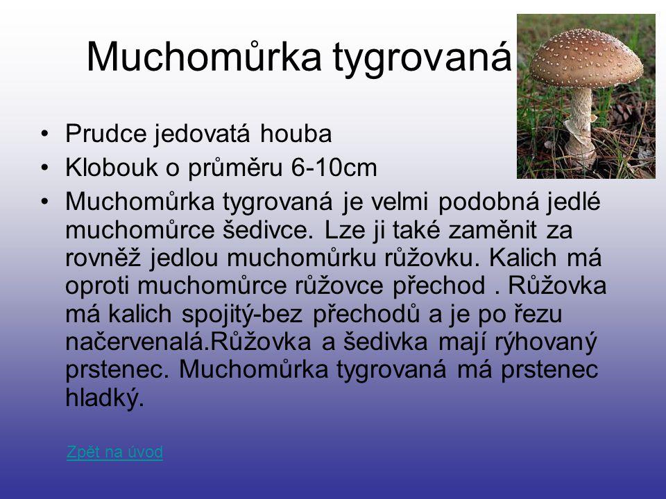 Muchomůrka tygrovaná Prudce jedovatá houba Klobouk o průměru 6-10cm Muchomůrka tygrovaná je velmi podobná jedlé muchomůrce šedivce. Lze ji také zaměni