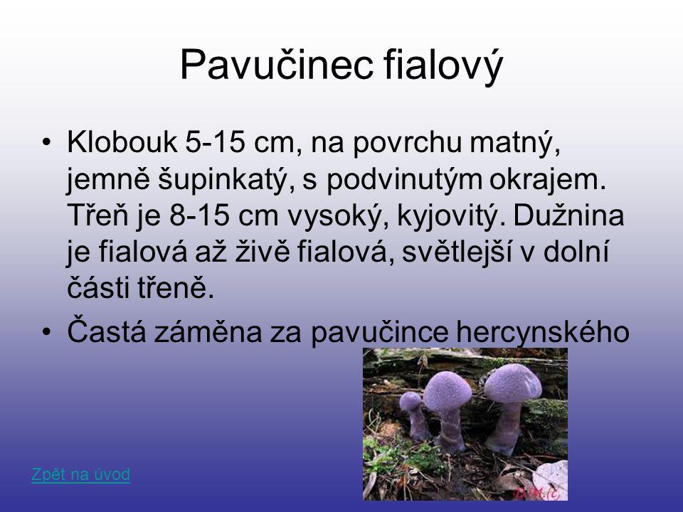 Pavučinec fialový Klobouk 5-15 cm, na povrchu matný, jemně šupinkatý, s podvinutým okrajem. Třeň je 8-15 cm vysoký, kyjovitý. Dužnina je fialová až ži