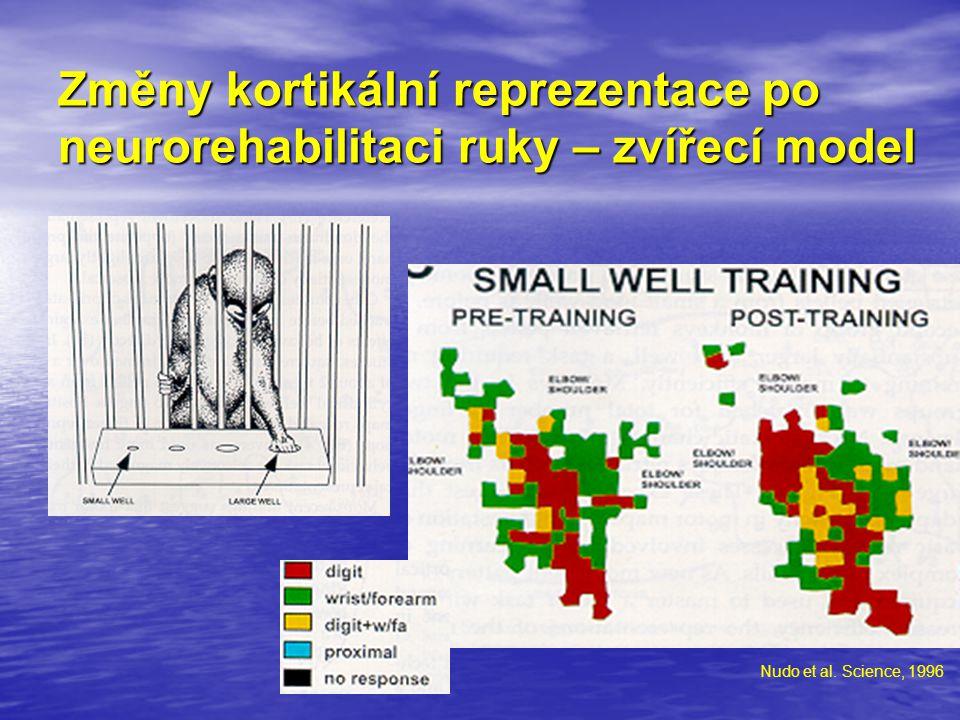 Změny kortikální reprezentace po neurorehabilitaci ruky – zvířecí model Nudo et al. Science, 1996
