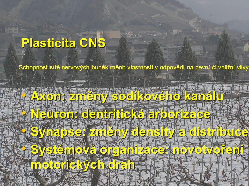 Plasticita CNS Axon: změny sodíkového kanálu Axon: změny sodíkového kanálu Neuron: dentritická arborizace Neuron: dentritická arborizace Synapse: změn