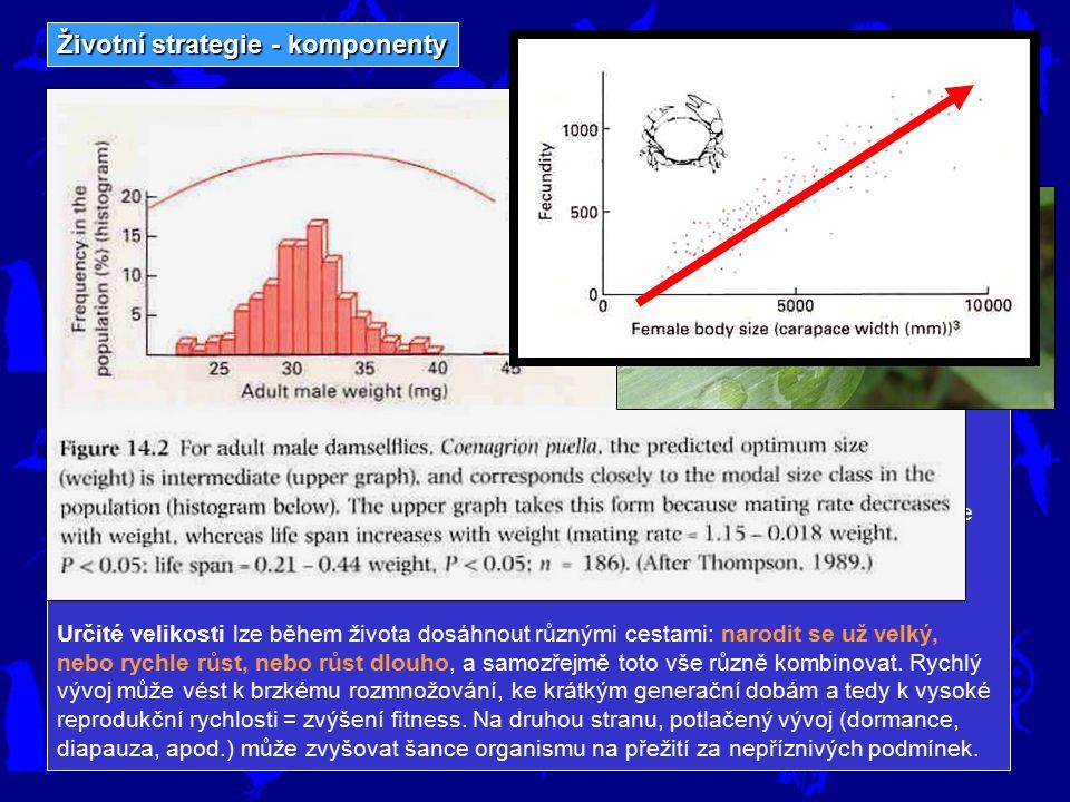 Životní strategie - komponenty (komponenty musí ovlivňovat fitness, tj. reprodukci a přežívání) Velikost Velikost je jedním z nejnápadnějších aspektů
