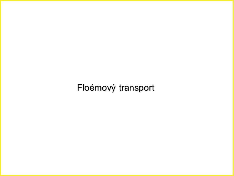 Floémový transport