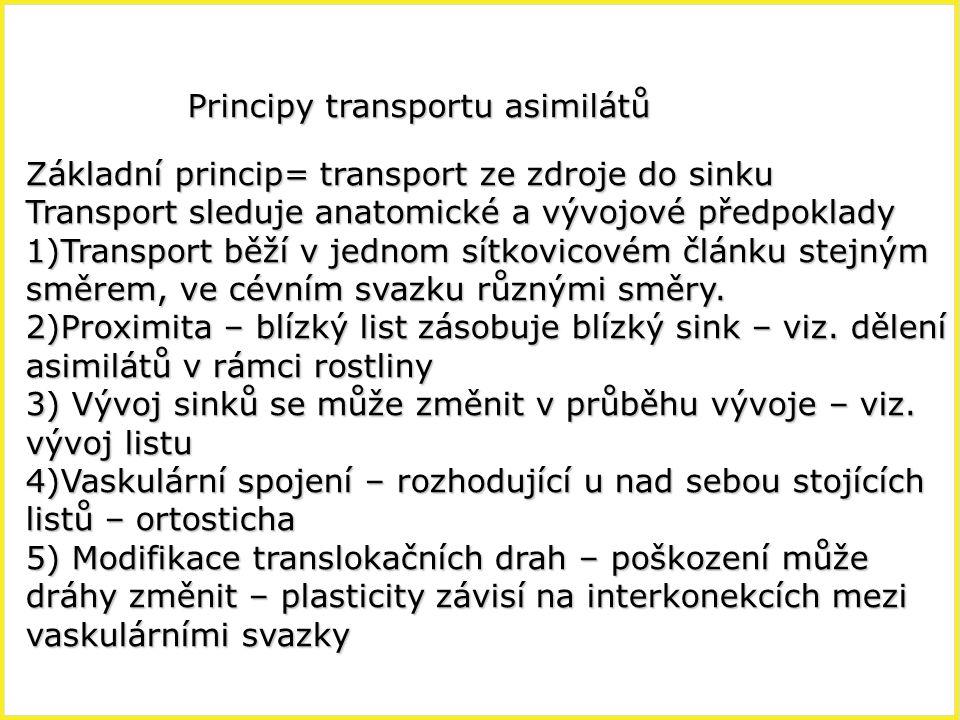 Principy transportu asimilátů Základní princip= transport ze zdroje do sinku Transport sleduje anatomické a vývojové předpoklady 1)Transport běží v je