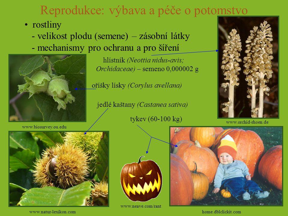 Reprodukce: výbava a péče o potomstvo rostliny - velikost plodu (semene) – zásobní látky - mechanismy pro ochranu a pro šíření www.biosurvey.ou.edu ww