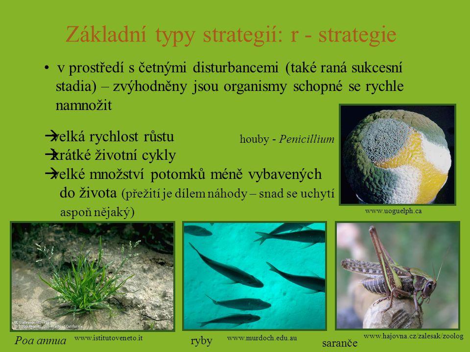 Základní typy strategií: r - strategie v prostředí s četnými disturbancemi (také raná sukcesní stadia) – zvýhodněny jsou organismy schopné se rychle n