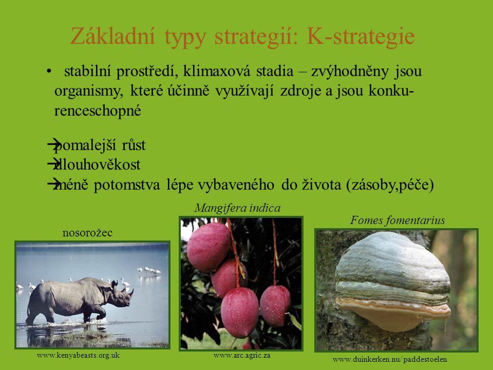 Základní typy strategií: K-strategie stabilní prostředí, klimaxová stadia – zvýhodněny jsou organismy, které účinně využívají zdroje a jsou konku- ren