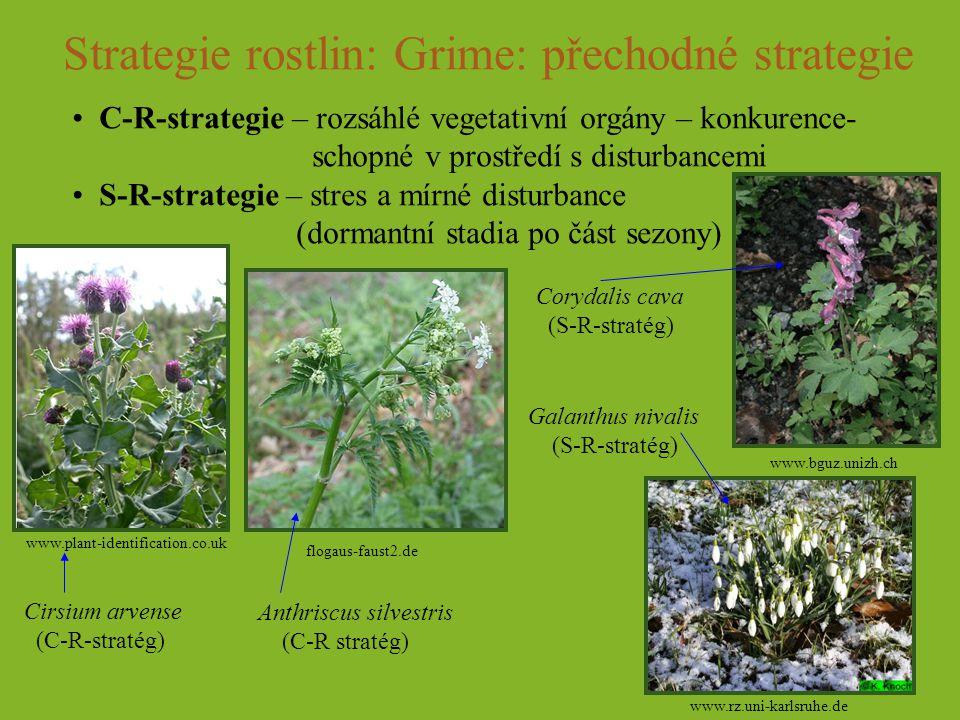 Strategie rostlin: Grime: přechodné strategie C-R-strategie – rozsáhlé vegetativní orgány – konkurence- schopné v prostředí s disturbancemi S-R-strate