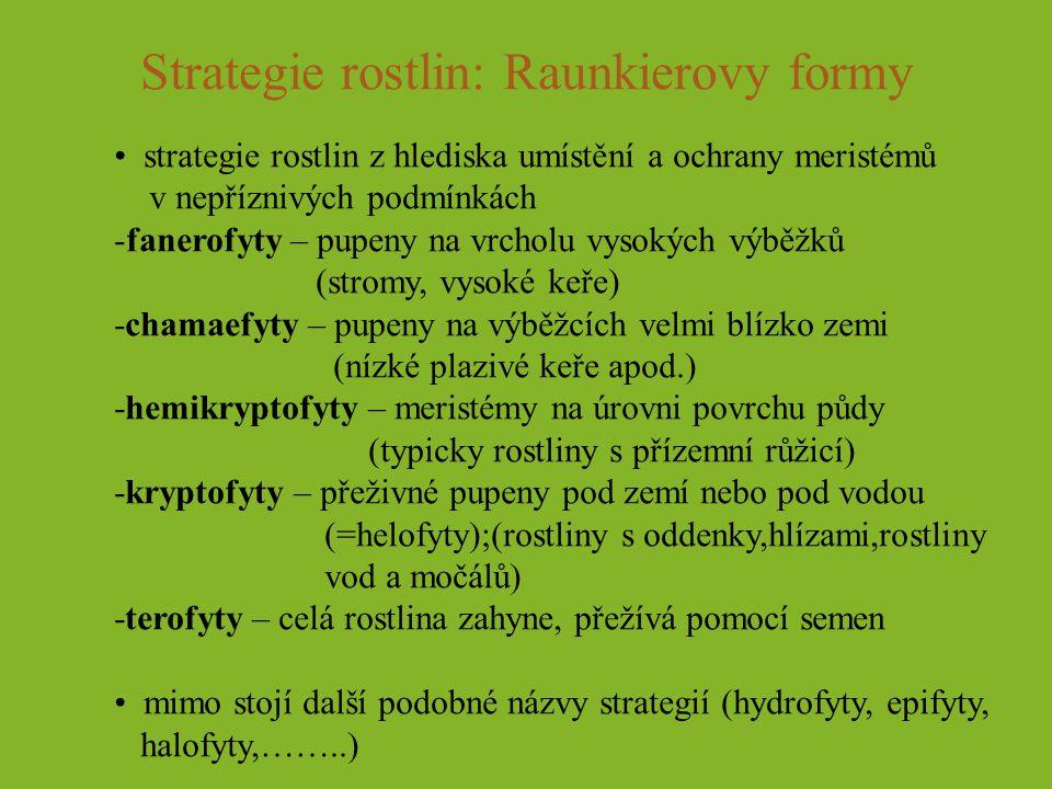 Strategie rostlin: Raunkierovy formy strategie rostlin z hlediska umístění a ochrany meristémů v nepříznivých podmínkách -fanerofyty – pupeny na vrcho