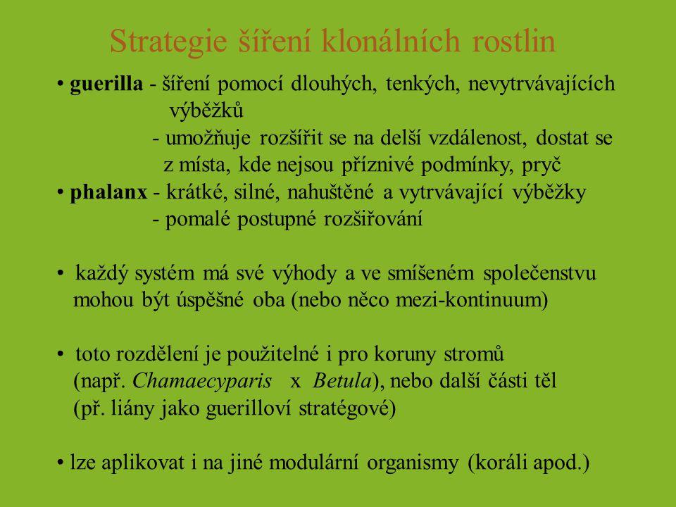 Strategie šíření klonálních rostlin guerilla - šíření pomocí dlouhých, tenkých, nevytrvávajících výběžků - umožňuje rozšířit se na delší vzdálenost, d