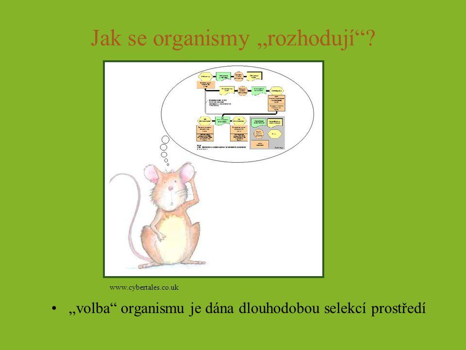 """Jak se organismy """"rozhodují""""? """"volba"""" organismu je dána dlouhodobou selekcí prostředí www.cybertales.co.uk"""