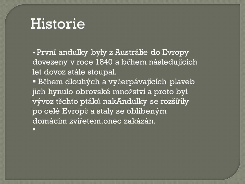 Historie  První andulky byly z Austrálie do Evropy dovezeny v roce 1840 a b ě hem následujících let dovoz stále stoupal.  B ě hem dlouhých a vy č er